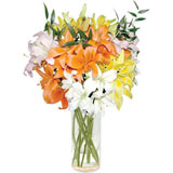 10 Mixed Asiatic Lilies