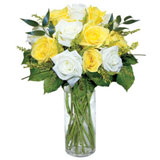 12 Yellow and White Rose..