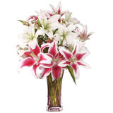 Asiatic And Stargazer Lilies