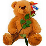 Brown Teddy with Red Rose