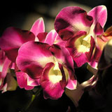 Fresh Orchid Flower Bouquet