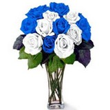 Magic Blue and White Roses