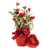 Roses and Sweet Heart Flower Gift