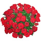 Roses Special For Moscow